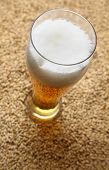 stock photo of malt  - Tall glass of light beer standing on barley malt grains - JPG