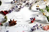 picture of spice  - herbal flowers and spice on science sheet - JPG