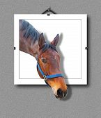 stock photo of brown horse  - Portrait of brown horse hanging on wall with 3d illusion that the head is sticking out - JPG