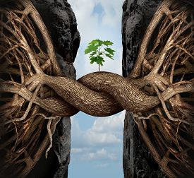 stock photo of bridge  - Unity growth concept and bridge the gap business symbol as two tree roots on a high steep cliff connecting and merging together bridging together to form a new sapling as an icon of partnership success and strength - JPG