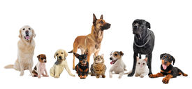 stock photo of cat dog  - group of dogs puppies and cats on a white background - JPG