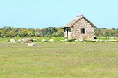 image of grassland  - Limestone house with reed roof in old scandinavian style - JPG