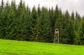 stock photo of grassland  - Wooden hunting tower on grassland in forest in spring season Beskids mountains Poland - JPG