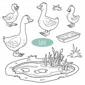 foto of baby goose  - Set of cute farm animals and objects vector goose family - JPG