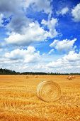 picture of haystack  - High resolution photo of autumn landscape with haystacks - JPG