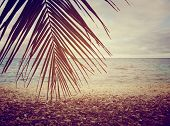 stock photo of french polynesia  - Tropical Beach With Style Filter In Rangiroa - JPG
