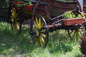 image of carriage horse  - Vintage style horse wagon - JPG
