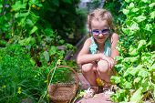 image of root-crops  - Cute little girl collects crop cucumbers and tomatos in greenhouse - JPG