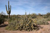 picture of superstition mountains  - Lost Dutchman State Park is a 320 - JPG