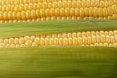 image of corn cob close-up  - close up view of corn cob as background - JPG