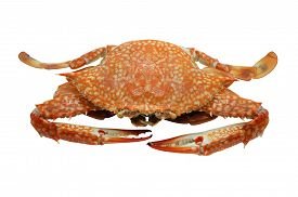 pic of cooked crab  - Streamed - JPG