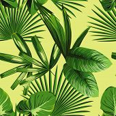 subtropical poster