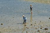 pic of clam digging  - Two local fisherman dig for clams at low tide in Okinawa - JPG