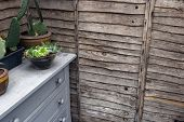 Wooden Wall With Cactus Plants In Pots On Cupboard, In The Garden poster