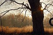 picture of tire swing  - Old tire swing in an oak tree - JPG