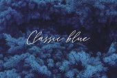 Classic Blue Spruce Background With Color Of The 2020 Year, Blue Pallette With Classic Blue Swatch A poster
