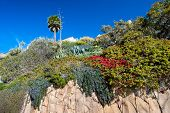 A cliff of sandstone along Laguna Beach California shows blooming, vibrant flowers growing down the