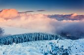 Fantastic evening winter landscape. Colorful overcast sky. Carpathian, Ukraine, Europe. Beauty world