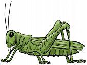 stock photo of cricket insect  - hand drawn sketch cartoon illustration of grasshopper - JPG