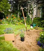 foto of grub  - Work in garden - JPG