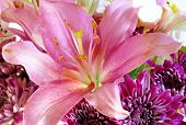 image of stargazer-lilies  - Big beautiful pink stargazer lily with purple flowers in a bouquet - JPG