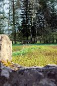 image of shooting-range  - View on shooting range in sunny day - JPG