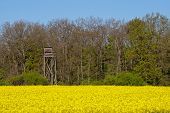 foto of rape-field  - Hunter stand at the edge of a forest - JPG