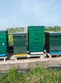 foto of bee keeping  - Swarming bees around the entrances of the hives - JPG