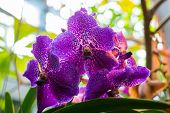 image of orquidea  - A beautiful orchid in the room interior - JPG