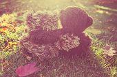 picture of stuffed animals  - Two stuffed bears hugging - JPG