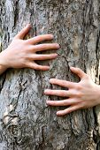 picture of gases  - Person hugs trunk large tree - JPG