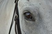foto of horse face  - closeup of a brown eye of a white horse - JPG