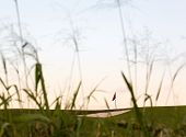 stock photo of tall grass  - Red flag of golf hole above sand trap or bunker seen from the tall grasses of the rough off the fairway - JPG