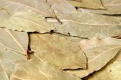 stock photo of bay leaf  - Close - JPG