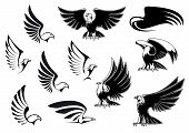 picture of eagles  - Eagle silhouettes showing flying and standing birds with outstretched wings in outline sketch style for logo - JPG