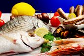 stock photo of crustaceans  - seafood selection with fish crustacean and mollusk - JPG
