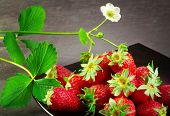 image of strawberry plant  - strawberry with strawberry plant over black background - JPG