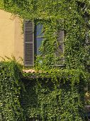 foto of climber plant  - The ancient style window with climber plants - JPG
