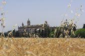 stock photo of carthusian  - Exterior view of the Cartuja monastery Jerez de la Frontera C - JPG