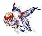 stock photo of goldfish  - Goldfish vector watercolor illustration - JPG