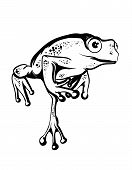 foto of amphibious  - image black and white frog jumping on a white background - JPG