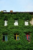 image of house-plant  - Urban house with walls covered with natural green plants - JPG