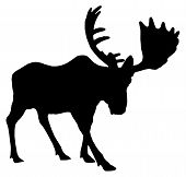 foto of big-foot  - Beautiful silhouette of an adult moose with big antlers - JPG