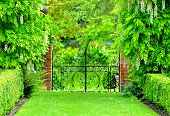 pic of gate  - Wrought iron gate surrounded by white wisteria - JPG