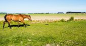 stock photo of walking away  - Light brown horse with a black tail and black manes slowly walking away in the meadow - JPG