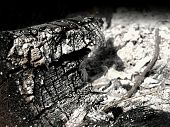 picture of ashes  - A charred wooden log surrounded by ashes - JPG