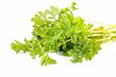 stock photo of cruciferous  - Plant Garden cress is isolated on a white background - JPG