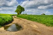 picture of dirt road  - dirt road among fields with a lone tree - JPG