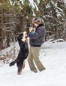 stock photo of dog park  - The man in the Park playing with the dog breed dogs - JPG