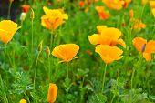 foto of meadows  - Beautiful meadow flowers on a sunny meadow  - JPG